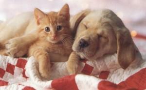 cane gatto condominio